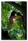 Tree Climber ...