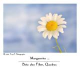 Marguerite ...