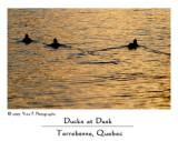Ducks at Dusk ...