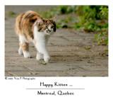Happy Kitten ...