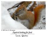 Écureuil cherchant de la nourriture ...