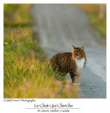 The Searching cat ...