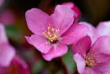 Flowering Tree  ~  May 7  [22]