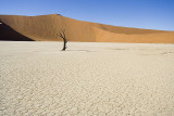 NAMIBIA : DEAD VLEI FOREST