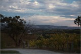 Wine growing area in Autumn