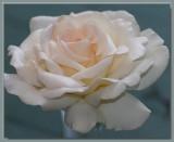 Marie-Luis Marjan - in a vase