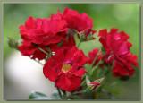Mainaufeuer/Red Ribbons