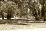 The Adelaide Parklands