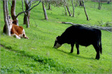 The lawnmowers in action