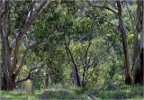 Aussie Scrubland
