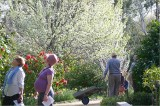 Stangate Garden in spring