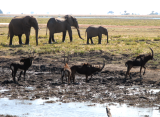 by the water hole