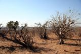 denuded landscape