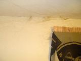 Cobwebs in master bedroom.