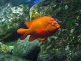 Scripps Aquarium, La Jolla, CA, June 2007