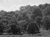 Richmond Park in Black and White