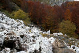 Marble's Autumn
