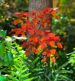 copper bush