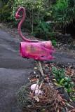 pink mingo