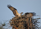 Birding at Hilton Head