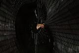 Spined Micrathena Spider Web