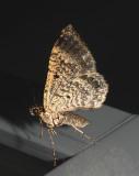 moth 3 8-23-07.jpg