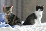 cats_X4052