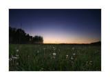 25.05.2007 - the dandelion dusk