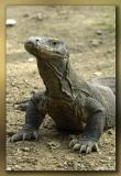 Images From Komodo