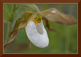 Lady Slipper, Hush Lake