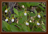 A Whole Buncha Ladyslippers!