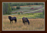 Horses in Field, Salmon Valley