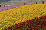 Fields of Color II