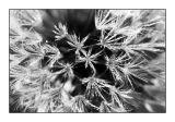 2 November - frozen seeds