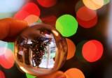 8 December - Christmas tree