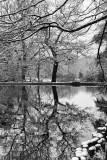 Keston Ponds, tree reflection