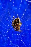 Spider Web Sparkles