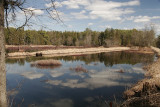 CRANBERRY BOGS IN LATE MARCH