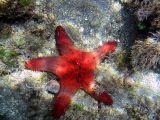 Philippines Underwater 2005