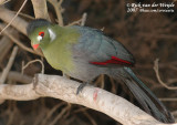January 2, 2007: Guinate Tropical Park (ESP)