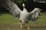May 18, 2007: Vogelpark Walsrode Dag I (D)