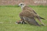 July 1, 2007: Stonehenge Wildlife (NL)