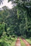 Kakamega Forest National Park