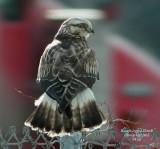 Hawks Galleries