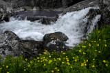 Yellow Flower Falls