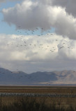 Wings Over Willcox