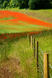 Along the fence 2