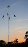 Los Voladores 4