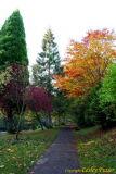 06 Autumn007.JPG