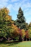 06 Autumn009.JPG